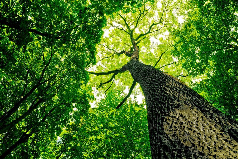 En güçlü ağacın, çok derin kökleri vardır